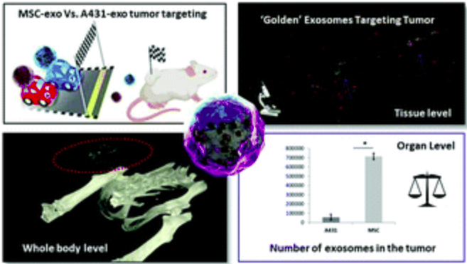 "Check out our newly published paper, entitled "" 'Golden' exosomes as delivery vehicles to target tumors and overcome intratumoral barriers: in vivo tracking in a model for head and neck cancer"", published in Biomaterials Science!